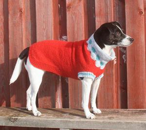 Jellyfish dog sweater